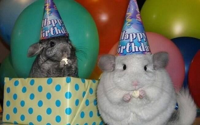 Esses animais comemorando o próprio aniversário são muito fofos