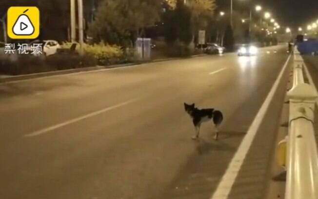 Cão fiel espera há mais de 80 dias sua falecida tutora em uma avenida movimentada
