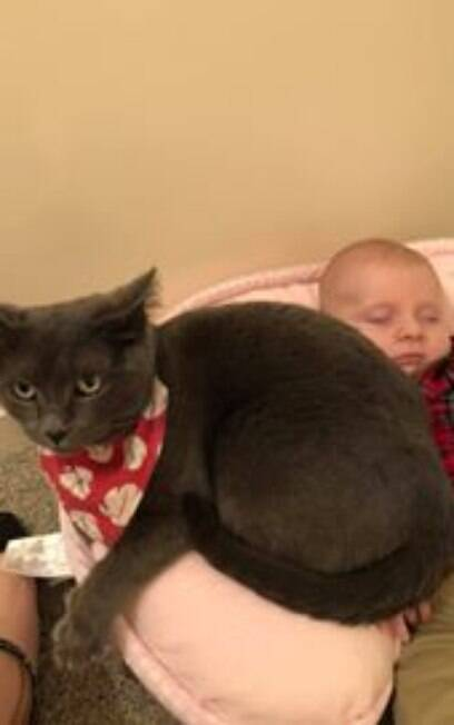 Gato cinza deitado ao lado de bebê dormindo