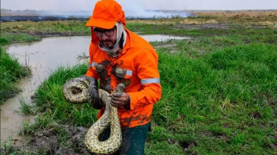 Sucuri é resgatada em poça de lama durante incêndios no Pantanal