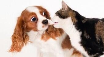 5 motivos pelos quais cães e gatos não podem ser amigos
