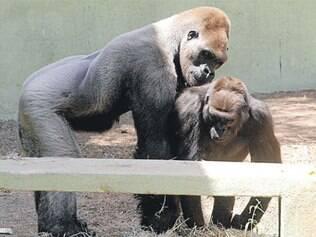 O animal chegou a ter uma companheira em 1984, mas não houve contato físico