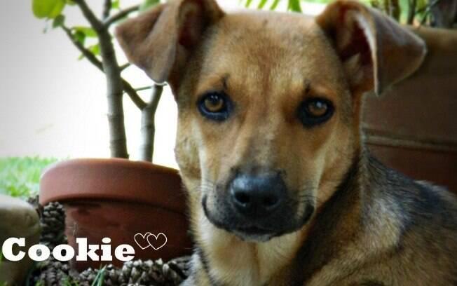 O Cookie é um dos animais para adoção da Anjos dos Bichos