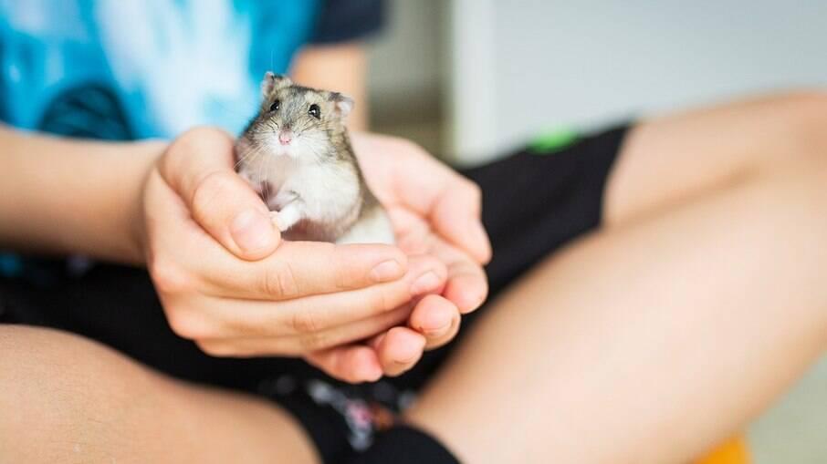Hamster é um pet carinhoso e divertido