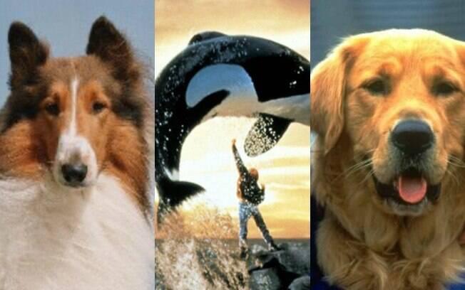 Animais do cinema: eles encantam gerações, mas já completaram seu tempo na terra