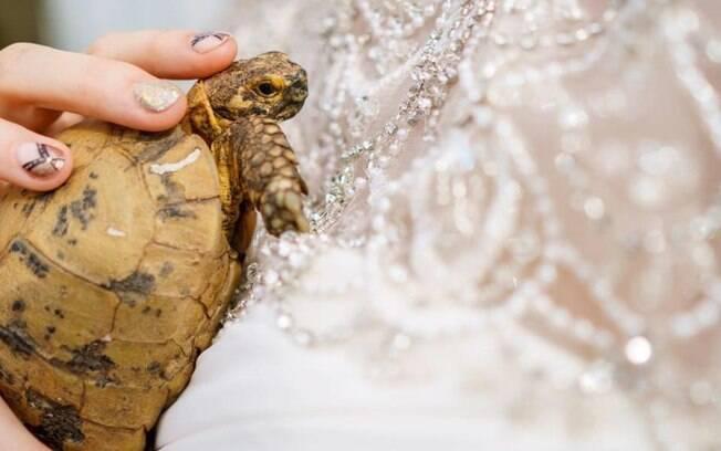 A tartaruga Sammy no colo da dona durante o casamento