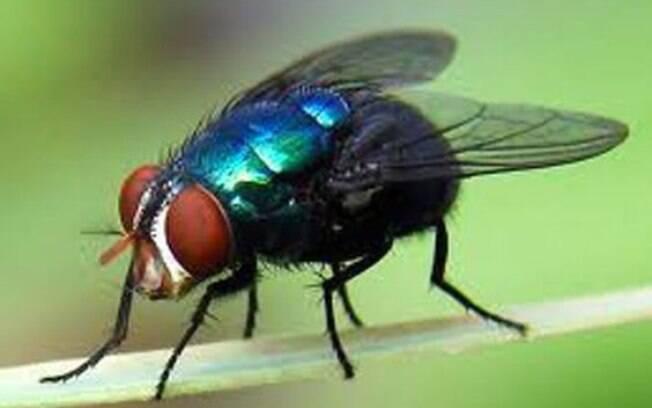 É importante espantar as moscas do cachorro para evitar que ele contraia alguma doença