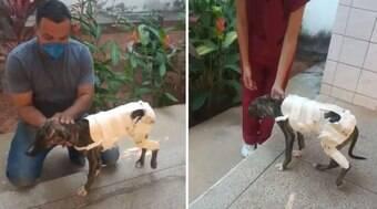 Cachorrinha de rua se recupera de fratura com prótese de PVC