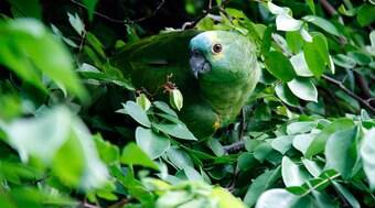 Seu papagaio grita muito? Então ele pode estar em apuros