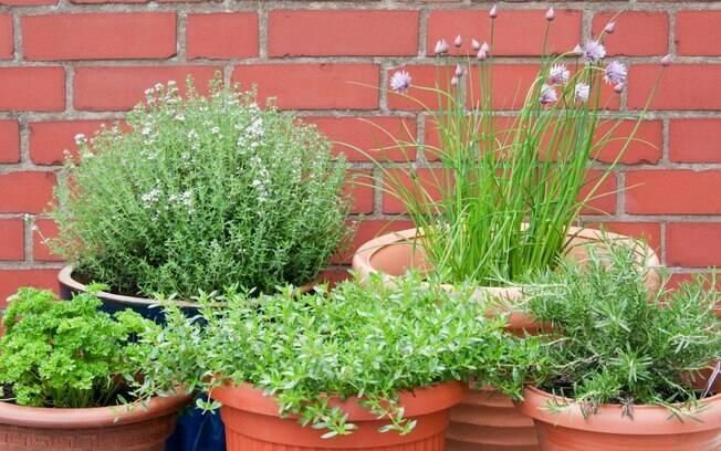 Horta: uso de ervas traz benefícios, mas é preciso ter cuidado ao usá-las