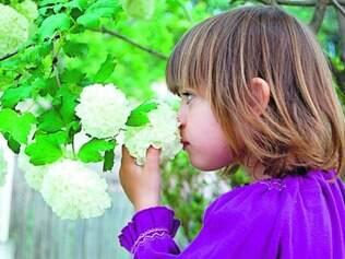 Mais de 15 receptores olfativos estão presentes tambem na pele