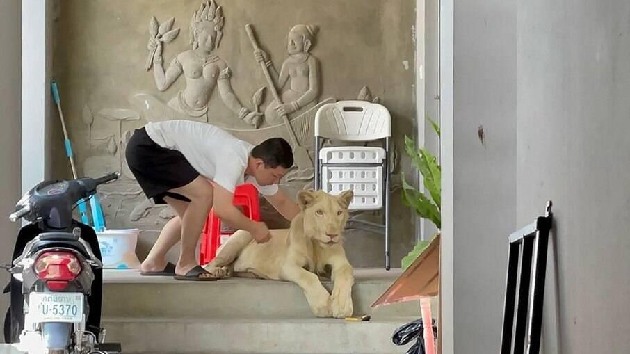 Leão de estimação é apreendido no Camboja após aparecer em vídeo no TikTok
