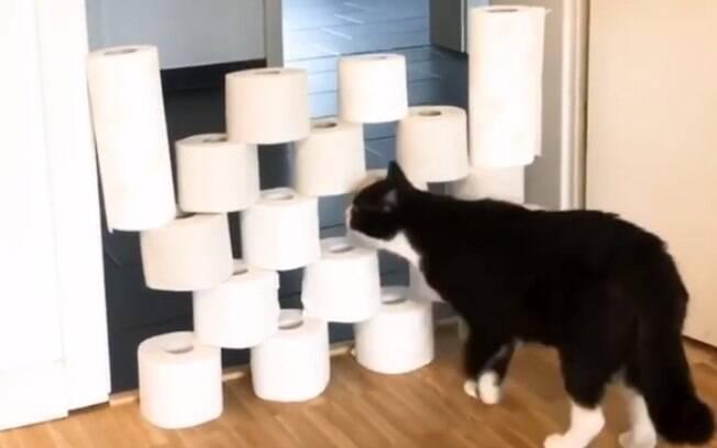 Desafio do papel higiênico com animais de estimação é novo sucesso nas redes sociais