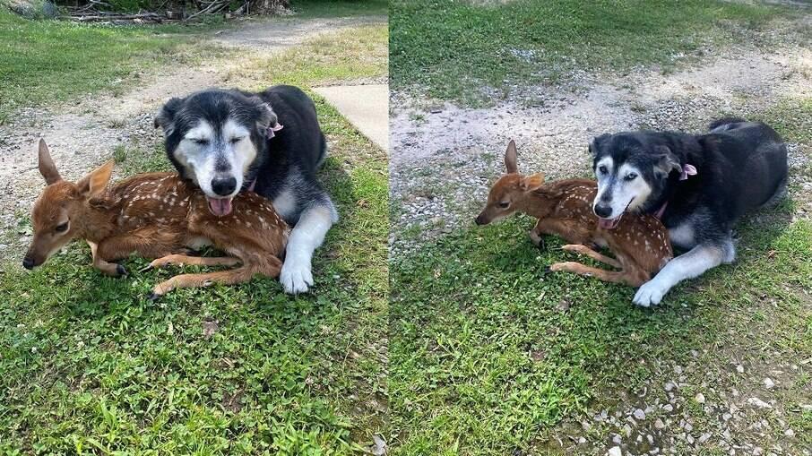 A cadela Zoey cuidou de Bambi, o bebê cervo até que ele se recuperasse e encontrasse um novo lar