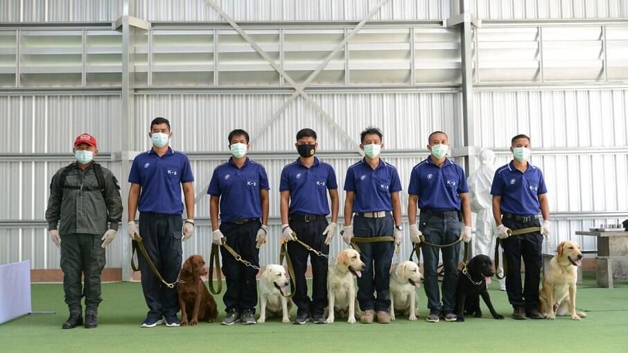 Na Tailândia, cachorros conseguiram farejar Covid-19 com 95% de precisão
