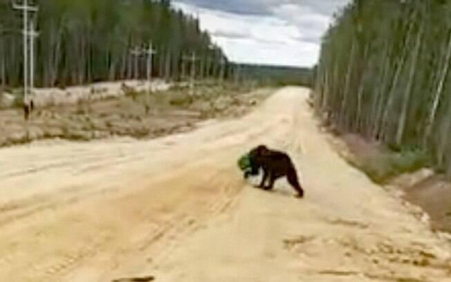 O urso ficou estressado e fugiu enquanto o homem tentava libertá-lo da lata; agora o governo tenta encontrar o animal