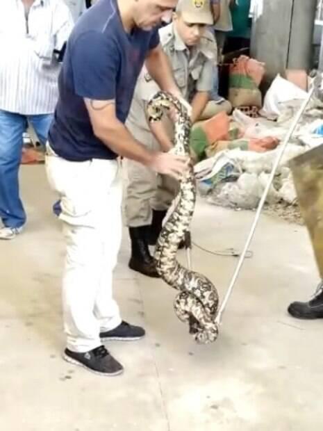 Homem recolhendo cobra na UFRJ