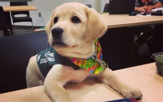 Um cachorro estudando matemática.