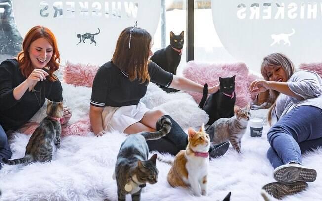 Crumbs & Whiskers, café que disponibiliza gatos para adoção