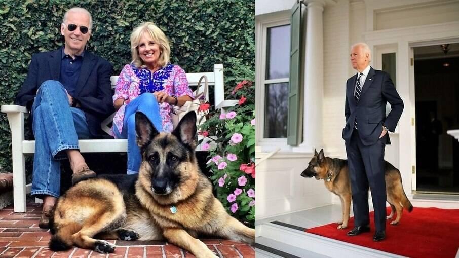 Morre Champ, cachorro de estimação de Joe Biden