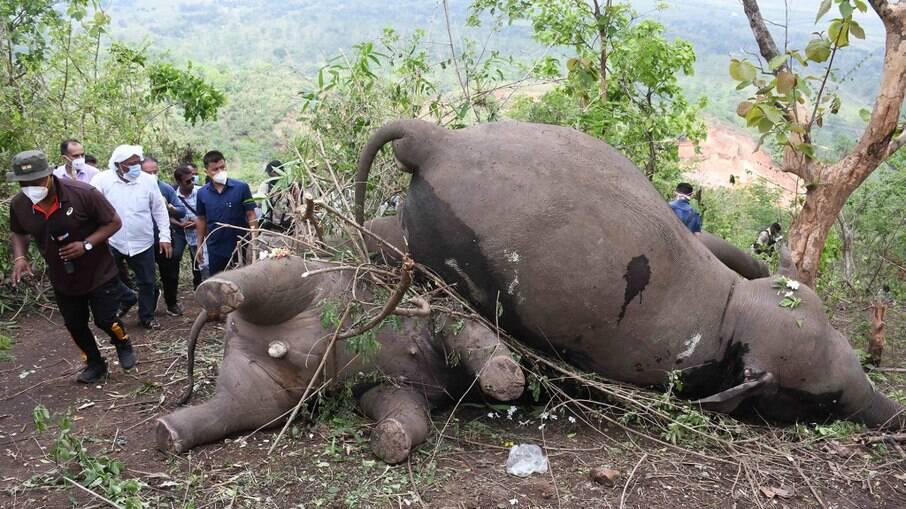 Elefantes mortos na Índia