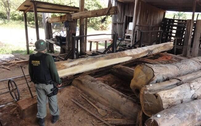 Bolsonaro comentou operação do Ibama contra retirada de madeira ilegal na Floresta Nacional do Jamari, em Rondônia
