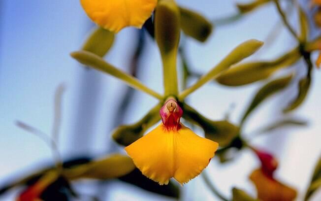Mais de 4,5 mil orquídeas podem ser vistas no Jardim Botânico Kew, em Londres, até o dia três de março