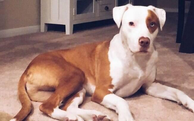Cão morre asfixiado após prender a cabeça num saco de salgadinho