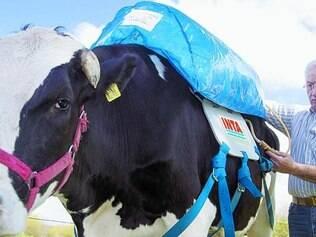 Sistema. Um tubo será ingerido no sistema digestório do animal e coletará o metano produzido