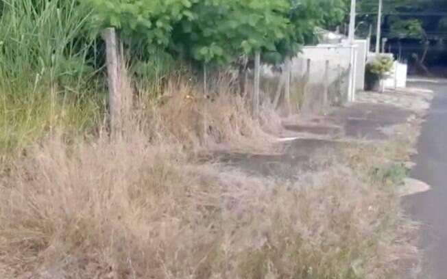 Reclamações de mato alto em terrenos cresce 74,8% em Campinas