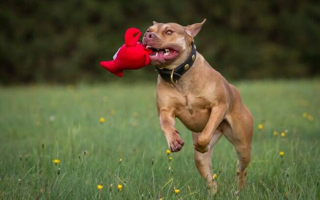 Brinquedo de cachorro é muito importante para estimular o pet a gastar energia