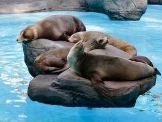 Zoológico de Barcelona: focas são atração garantida para os pequenos