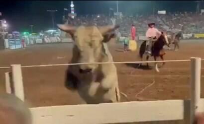 Touro descontrolado avança sobre plateia durante rodeio