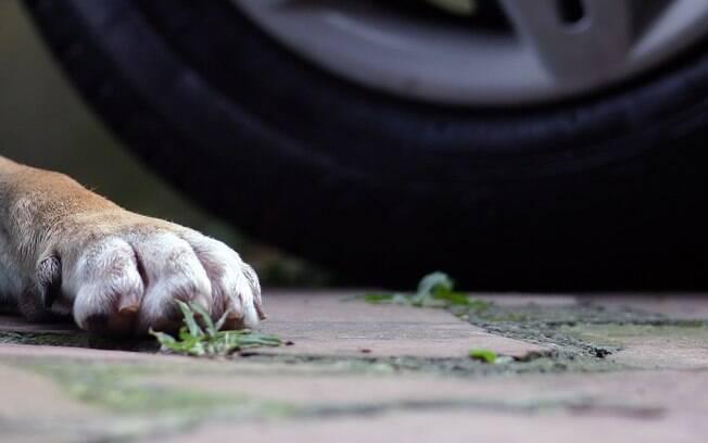 Como socorrer um gato ou cachorro atropelado?