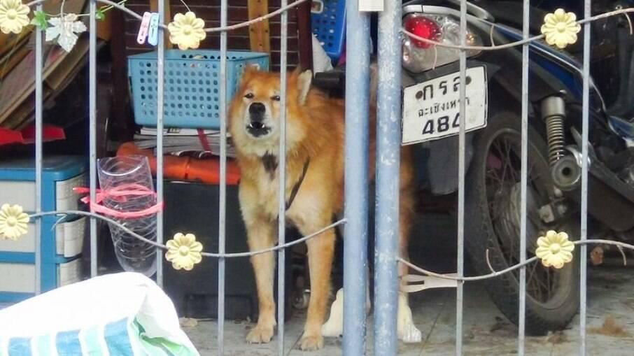 O leal cachorro foi fotografado guardando a casa de seu dono, que morreu de Covid-19 na Tailândia
