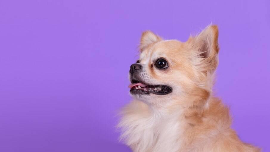 Os cachorros são capazes de entender algumas palavras ditas pelos tutores e assimilar a coisas boas ou ruins