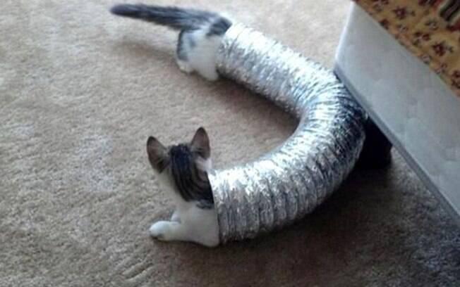 Espero que isso seja mesmo só uma ilusão de ótica e sejam dois gatos.