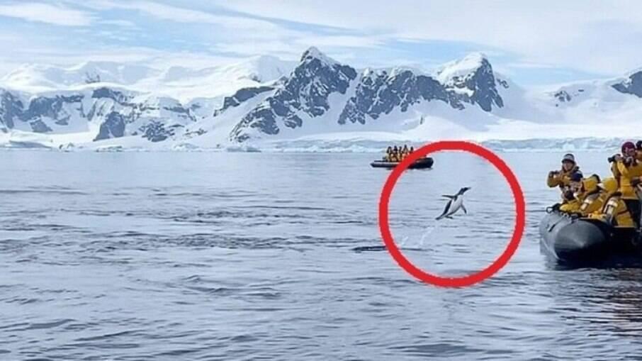 O pinguim pulou no bote dos turistas para fugir das orcas