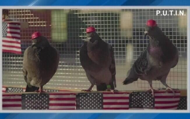 Animais foram vistos circulando em Las Vegas
