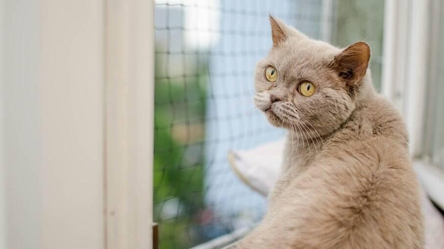 Telas em janelas são essenciais para a segurança do pet