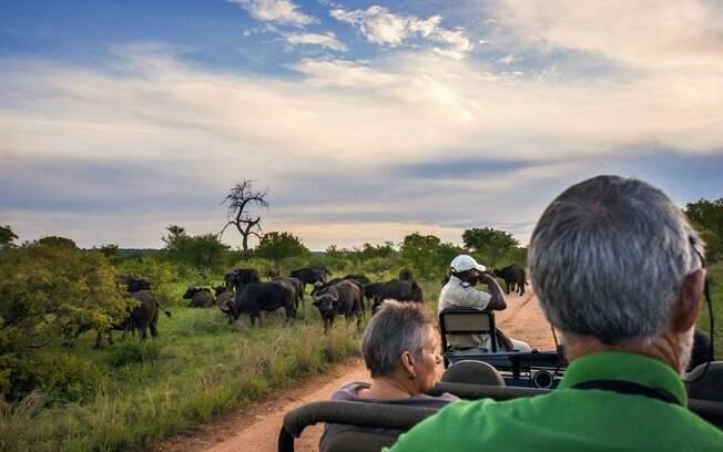 Turistas vendo gnus em safári pelo Parque Nacional Kruger
