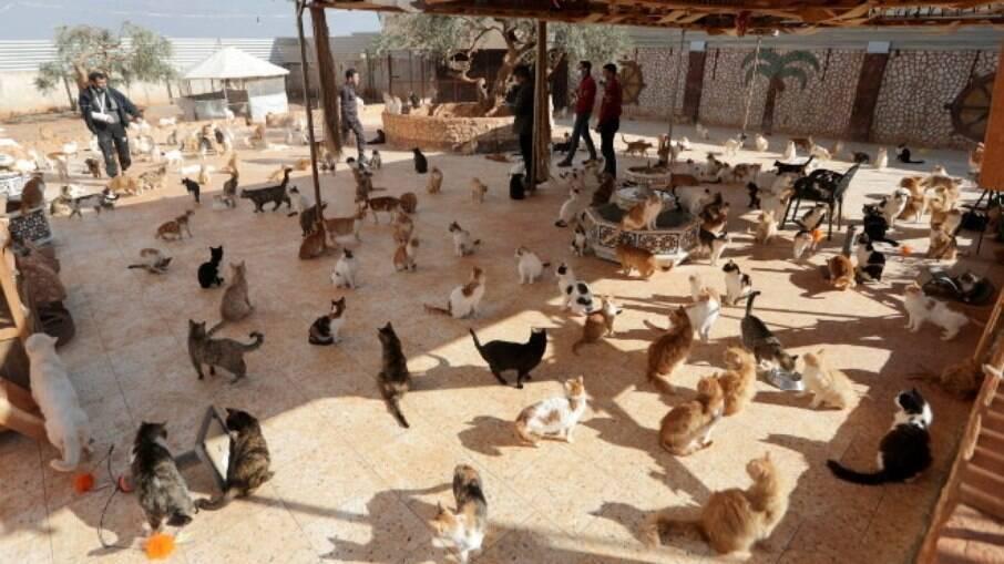 Em um espaço de cerca de 2 mil metros quadrados, os animais recebem cuidados médicos, alimentação e abrigo
