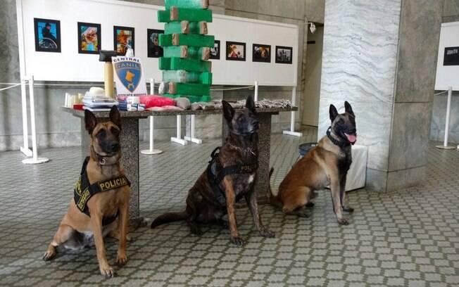 Drogas apreendidas pelos cães do Canil da PM durante ação em São Vicente