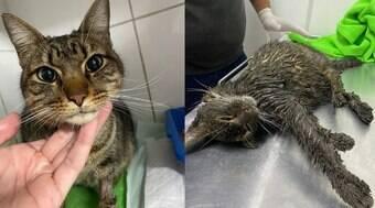 Gato encoberto por graxa mia para indicar que está vivo e é resgatado