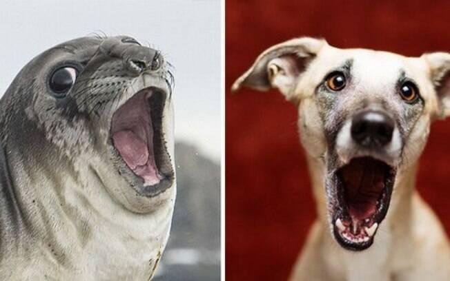 Essa foca e esse cachorro estão espantados.