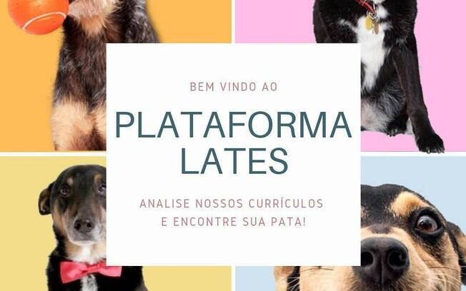 A plataforma ajuda cães para adoção a acharem um lar