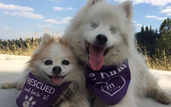 Hoshi é um cão cedo e Zen é um cão adotado que se tornou guia