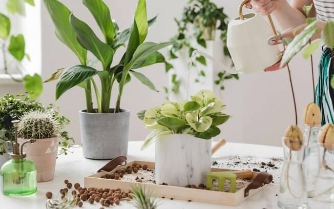 4 dicas valiosas para cuidar das plantas no inverno