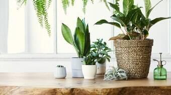 Aprenda a plantar sementes mesmo dentro de um apartamento