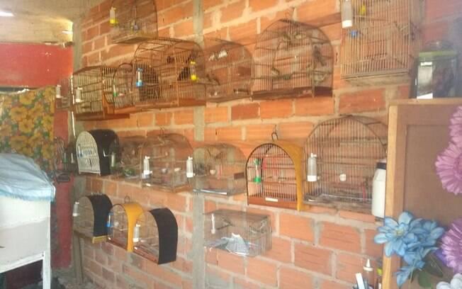 Aves apreendidas pela Polícia Militar Ambiental em Conchal